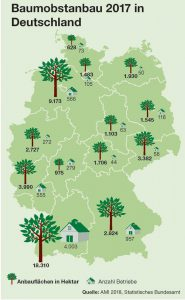 Obstanbaufläche Bundesländer, Obstbaubetriebe Deutschland, Apelanbaugebiete Grafik