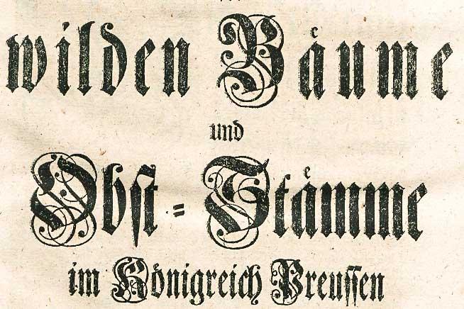 Anpflanzung der wilden Bäume und Obst-Stämme im Königreich Preussen Berlin, den 7ten Junii 1765.