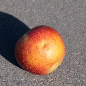 Apfel-mit-Hagelschaden