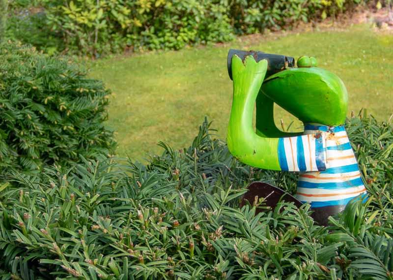 Frosch als Beobachter