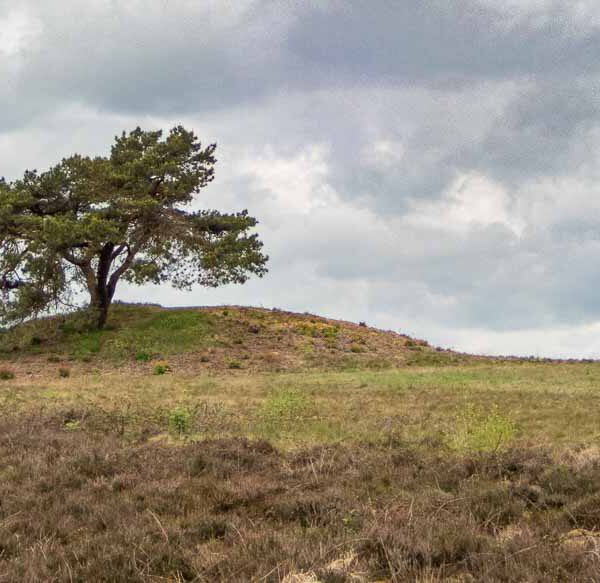 Ochsenweg-Langeln-Hügelgrab